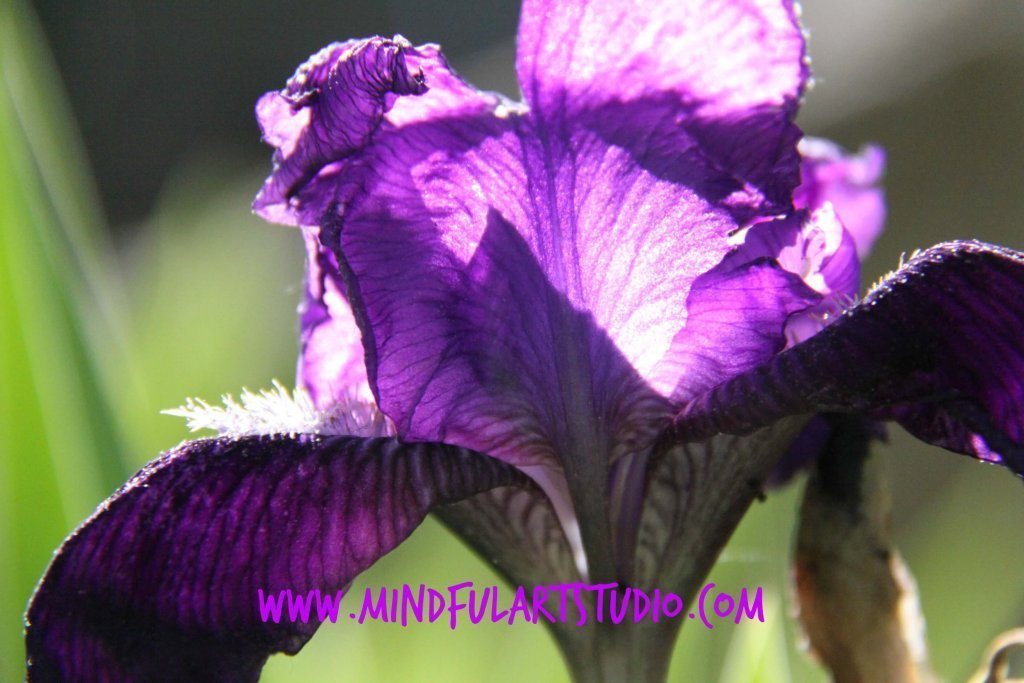 Mindful Light Photo