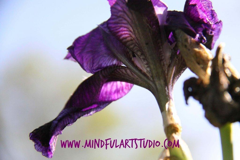 Mindful Photo Study