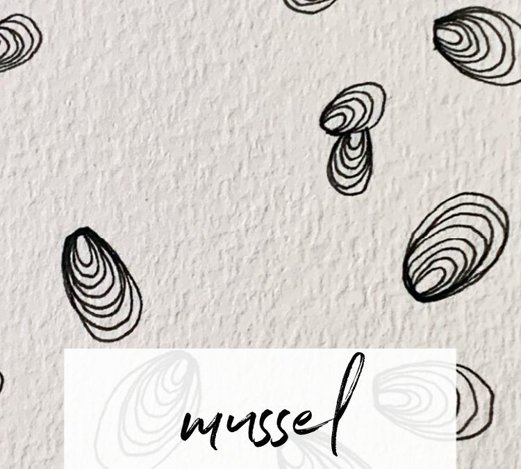 Mussel: A Mindful Drawing Pattern